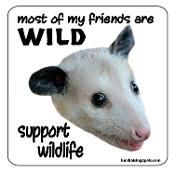 Most of My Friends Are Wild -Opossum- Magnet - NEW!