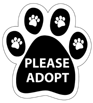 Please Adopt Paw Magnet