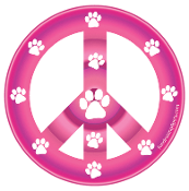 Peace Sign Circle Magnet - Hot Pink