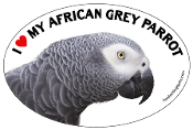 I Love My African Grey Parrot oval magnet - NEW!