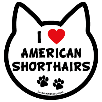 I Love American Shorthairs cat head magnet *bargain bin*